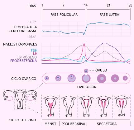 Cenfer Centro De Fertilidad Clínica Lugo Calculadora Femenina
